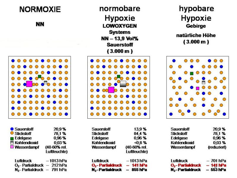 hypoxie-vs-normoxie